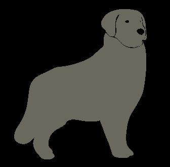 ラブラドールレトリバー ゴールデンレトリバーなどの大型犬